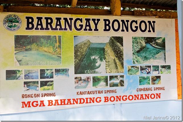 bongon springs